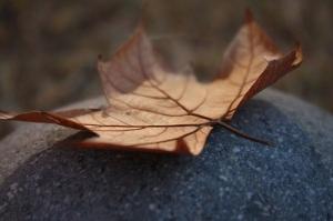 leaf-56311_1280