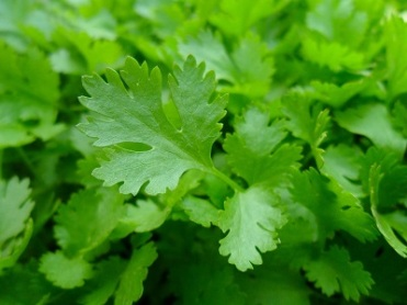 parsley-741996_1280