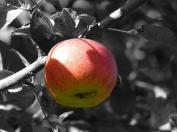 apple-273839_1920